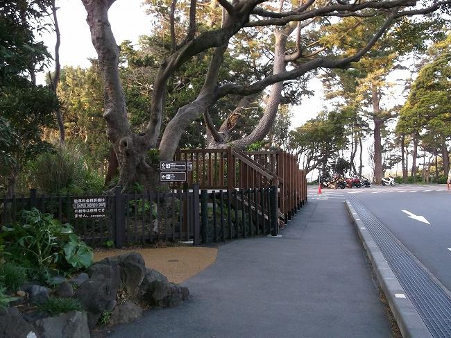 37 城ケ崎のつり橋へ