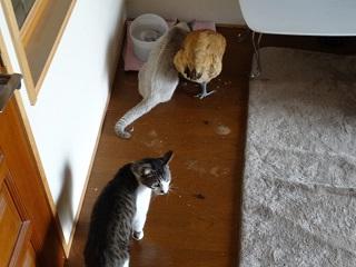 食べたい猫