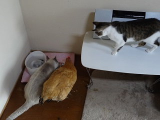 食べたい猫5