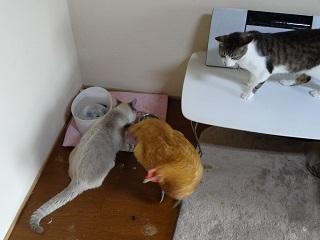 食べたい猫4
