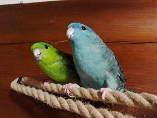 放鳥221