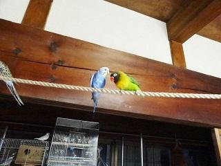 放鳥411