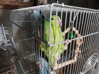放鳥550