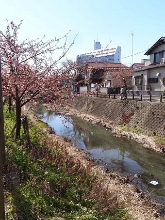 松戸駅周辺17