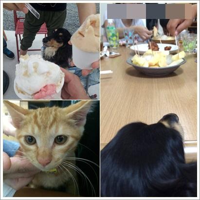 cats5_201407221310122eb.jpg