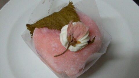 マキノ桜①