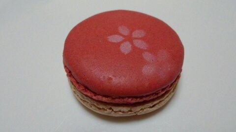 グラモウディーズ桜①