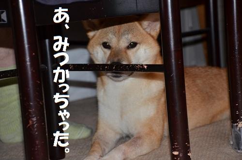 今朝のゆず 7/31
