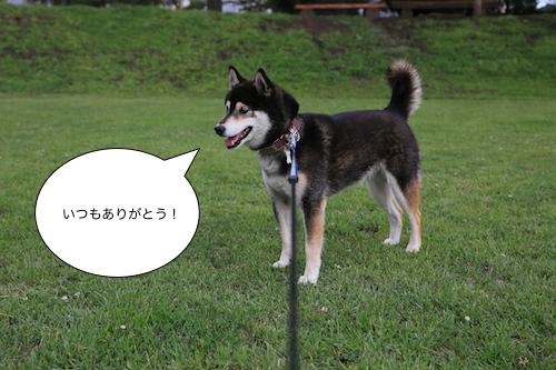 IMG_6279m.jpg