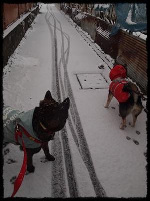 雪の日P2148928