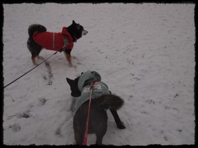 雪の日P2148936