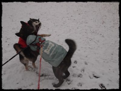 雪の日P2148937
