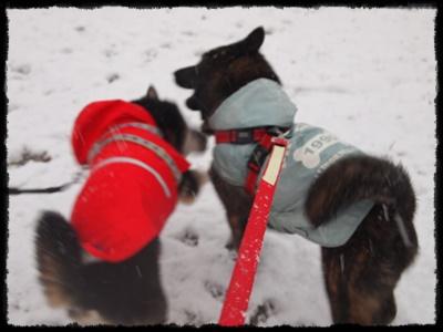 雪の日P2148941