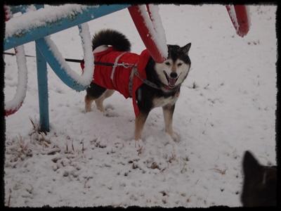 雪の日P2148948