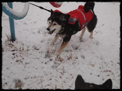 雪の日P2148949