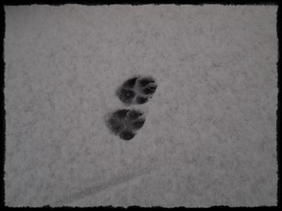 雪の日P2148933