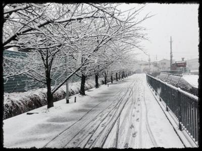 ri-ru雪①