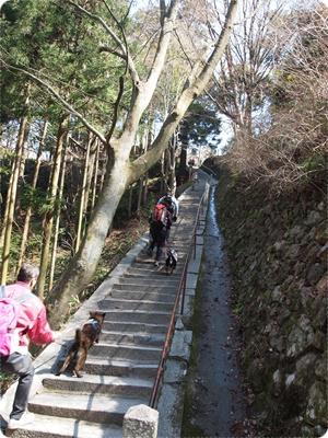 槇尾山ハイクP3239169