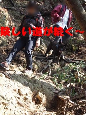 槇尾山ハイクP3239199