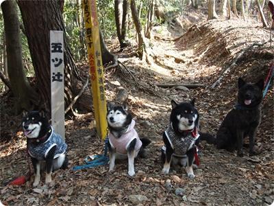 槇尾山ハイクP3239226