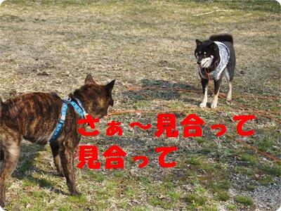 槇尾山ハイクP3239235