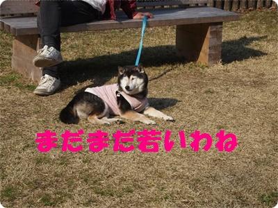 槇尾山ハイクP3239247