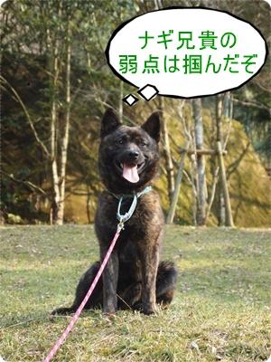 槇尾山ハイクP3239256