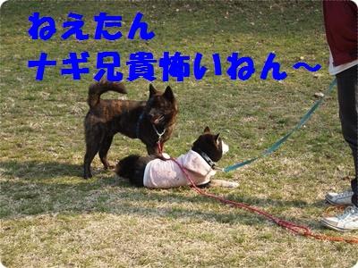 槇尾山ハイクP3239266
