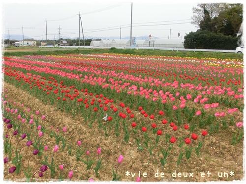 20140419blog25.jpg
