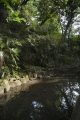 密林の中の池