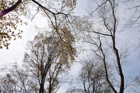 04yamasakura0501_0944.jpg
