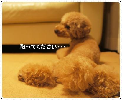 20140707_11.jpg