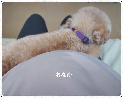 20140711_04.jpg