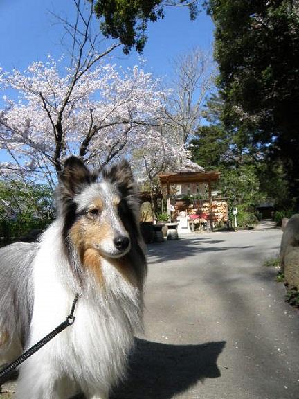 源氏山公園 葛原岡神社2