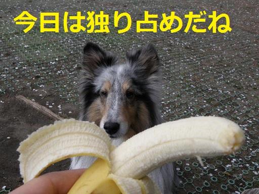 バナナ独り占め