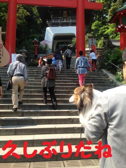 江の島神社3