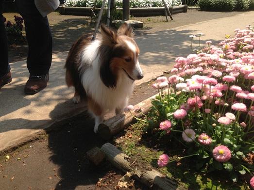 お花が綺麗3