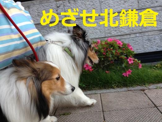 めざせ北鎌倉