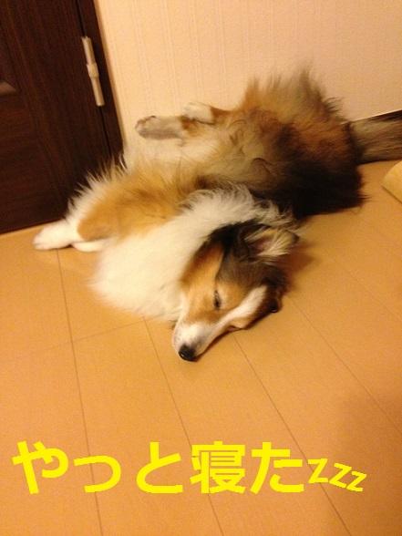レオン寝た