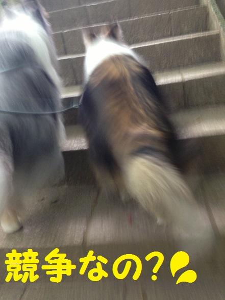 円覚寺12