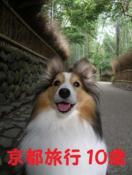 京都旅行10歳