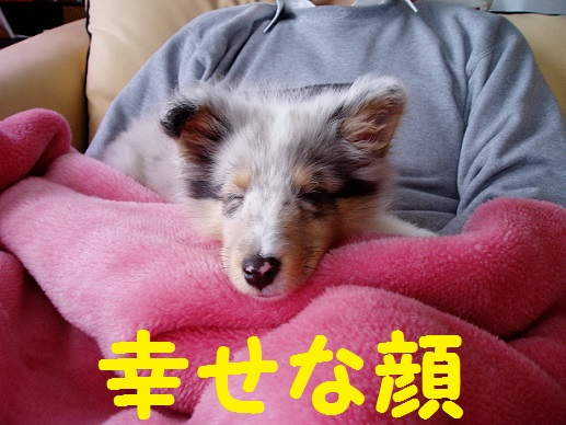 miku眠り