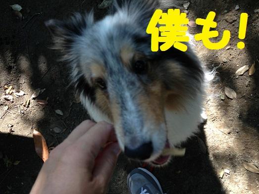 本郷台公園5