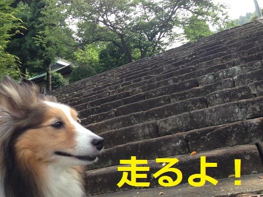 大長寺ダッシュ0