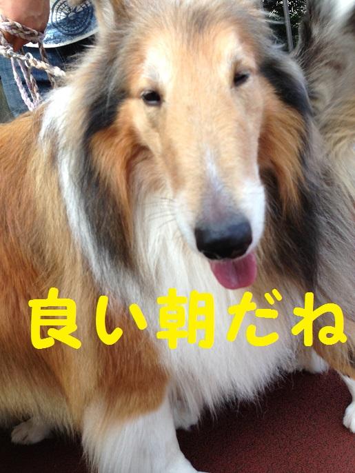 サニーちゃん2
