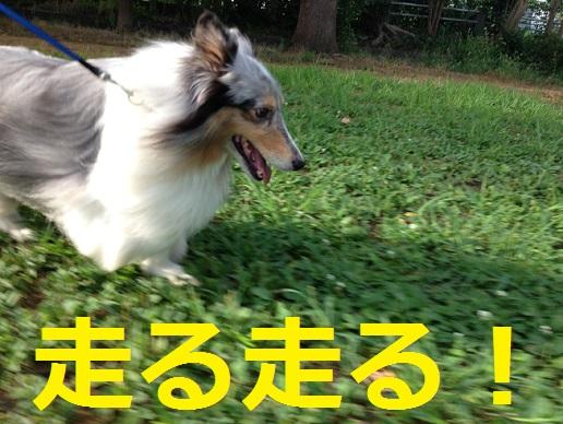ミク走る1