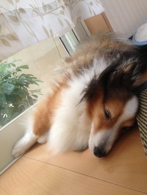 眠るレオン