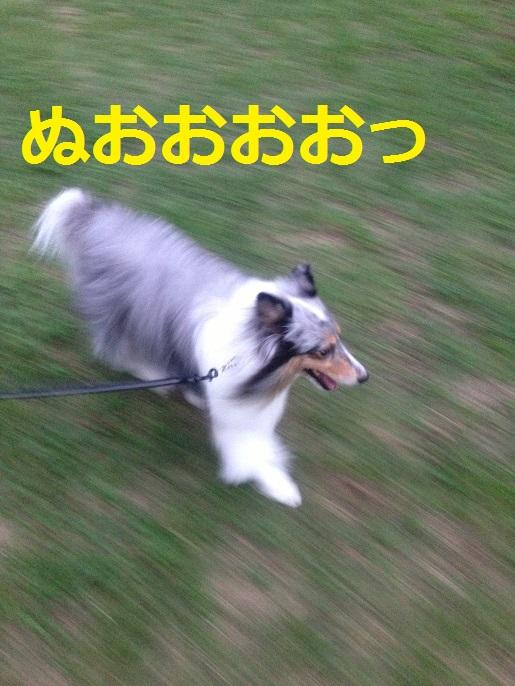 ミク散歩1