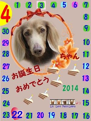 こむぎちゃん4-22-2014
