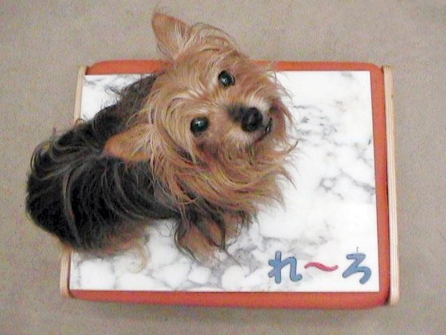 2006年8月10日大理石のベッドを買った。